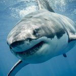 'Is A Shark Promising To Sell My House?'
